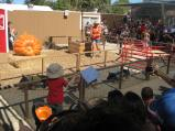 Pig races at the fall festival
