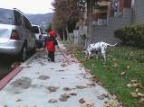 Noah walking Pinta
