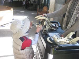 My son enjoyed his paleontologist moment.