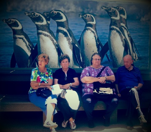 Hanging out with penguins.