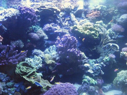 Enjoying nature's bliss under water.