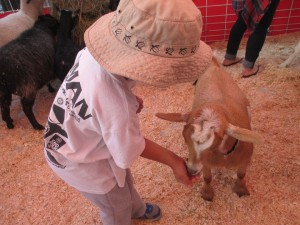The second best part for them seemed to be the petting zoo.