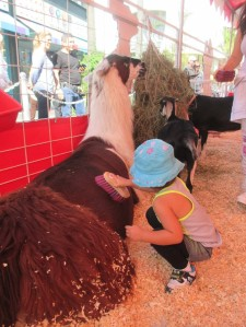 She was fearless during the petting part even though the animals were bigger.