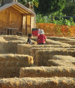Running through the hay maze was much better than the corn maze. They didn't get lost.