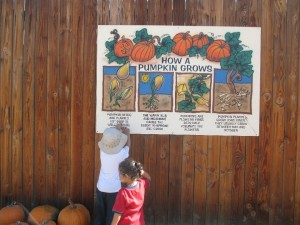 While investing the pumpkin patch, my son found the life cycle of the pumpkin and decided to educate his little sister.